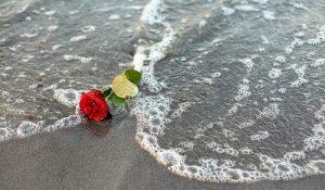 Rose im Wasser © twystydigi - stock.adobe.com